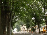 自然 道路 フリー画像