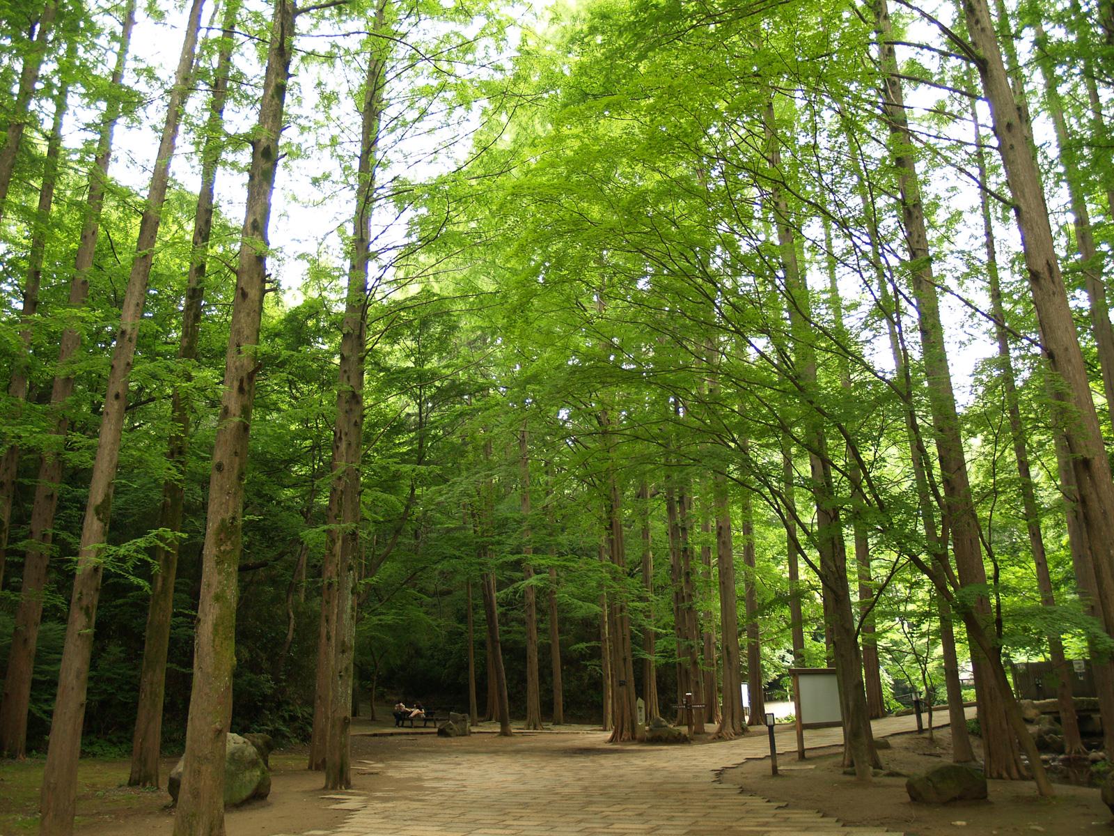 自然の画像 p1_39
