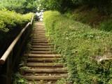 自然 階段 木
