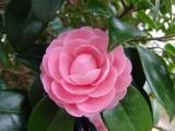 花 フリー画像