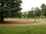 公園 フリー画像