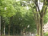 自然 道路