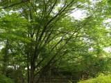 自然 森林 フリー画像