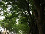 自然 森林