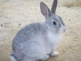 ウサギ フリー画像