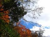 紅葉 フリー画像
